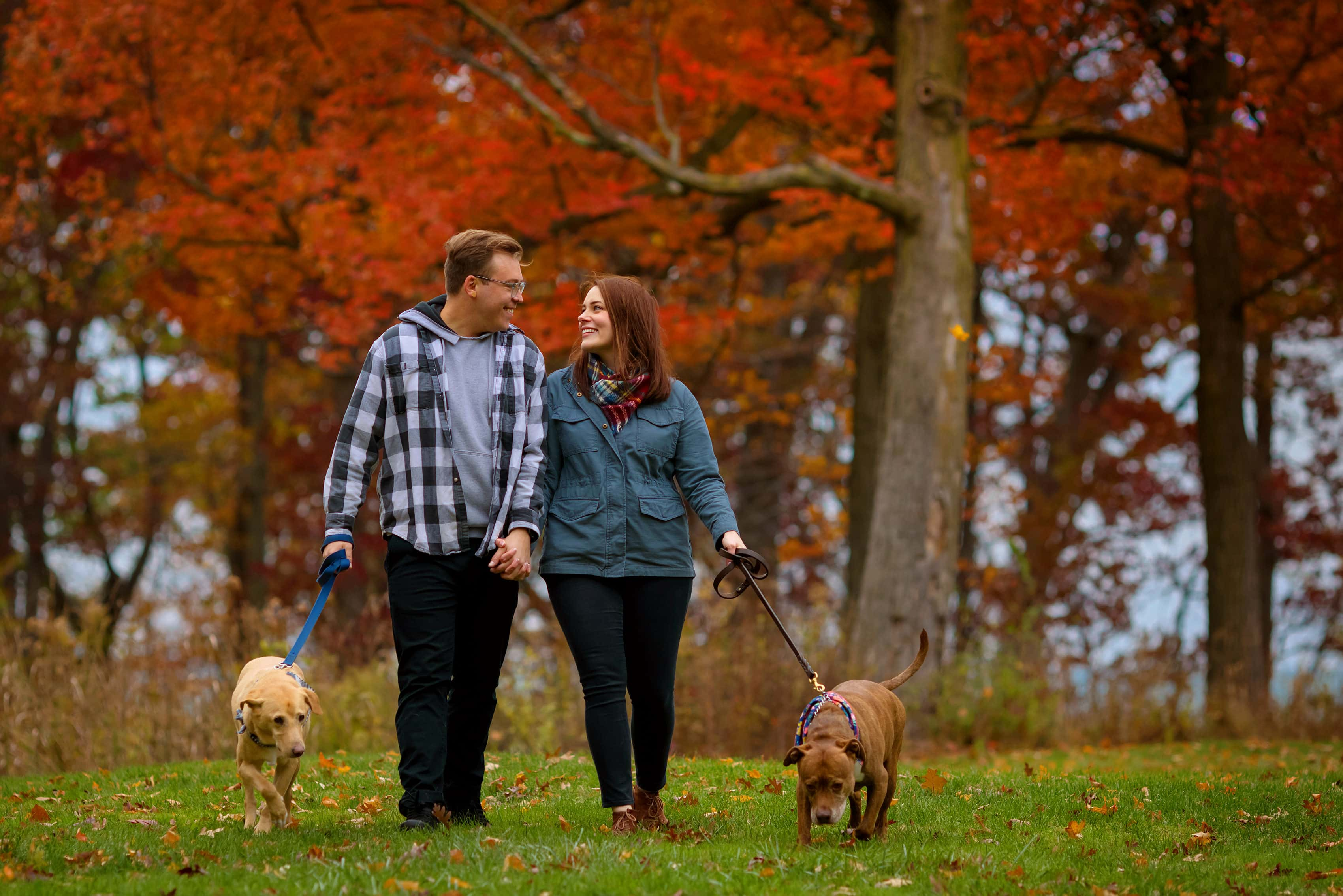 couple walks with their dogs with colorful trees in the background during engagement session at Rosewood Park in Highland Park, Illinois