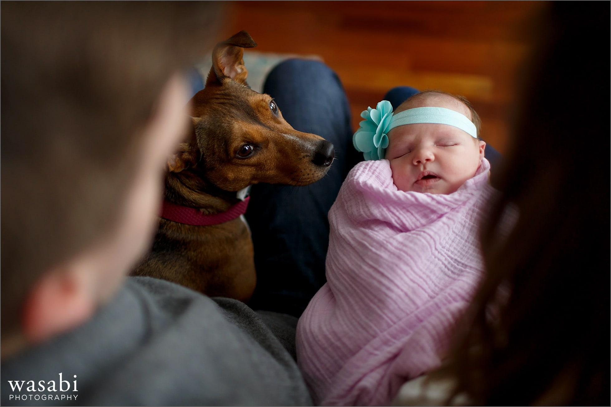 chicago-baby-and-dog-photographer-11