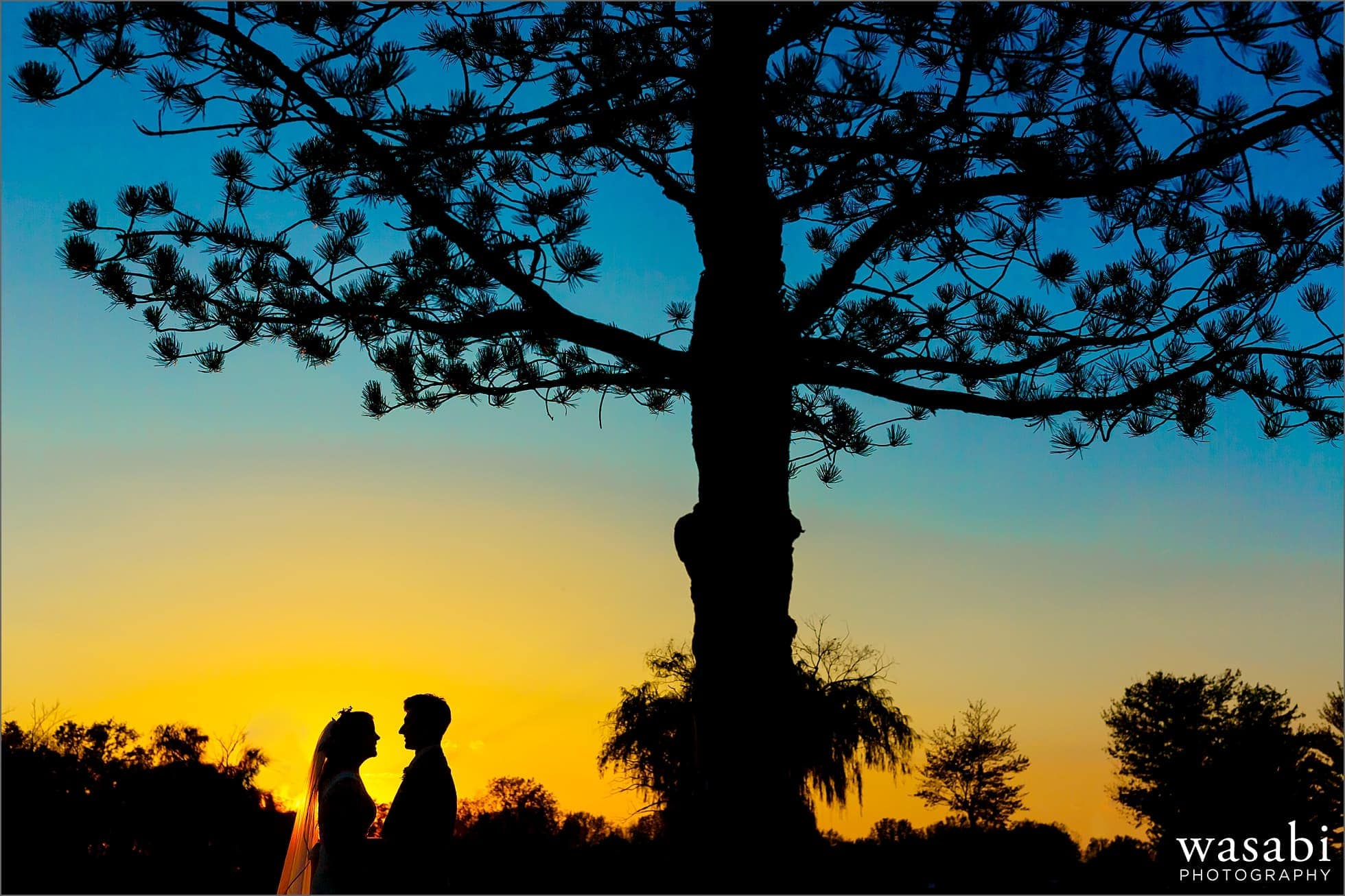 colorful silhouette of bride and groom with tree during wedding portraits at Worth Waterfalls