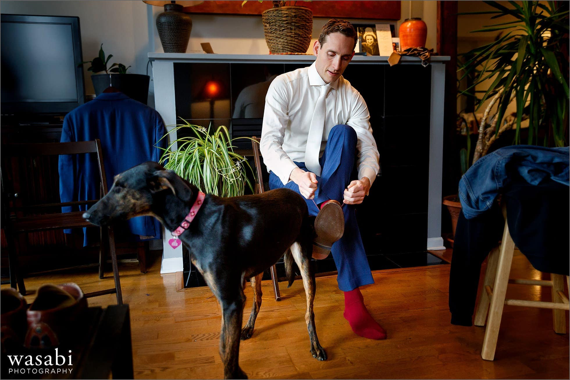 groom puts on shoes at home with dog while getting ready for Chicago wedding